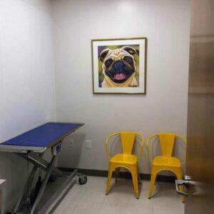 animal artwork in a veterinarian's office